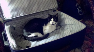 Sam trying to help us pack for a trip.